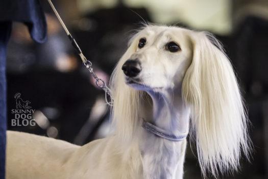 Euro Dog Show 2018 – fotorelacja