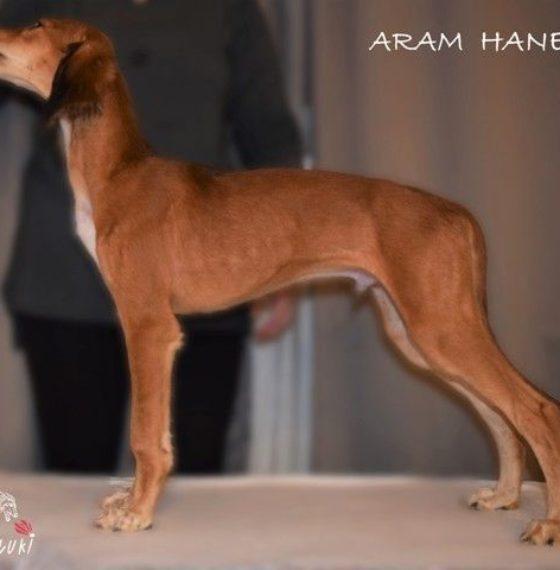 ARAM Hanesi